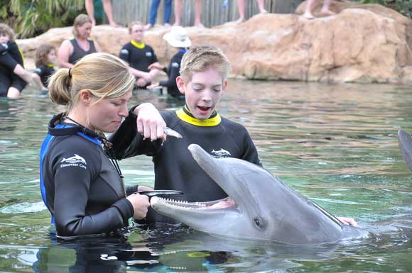 Brian feeding the dolphin